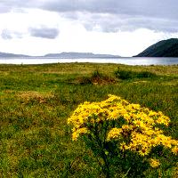 Shores of Ardmucknish Bay